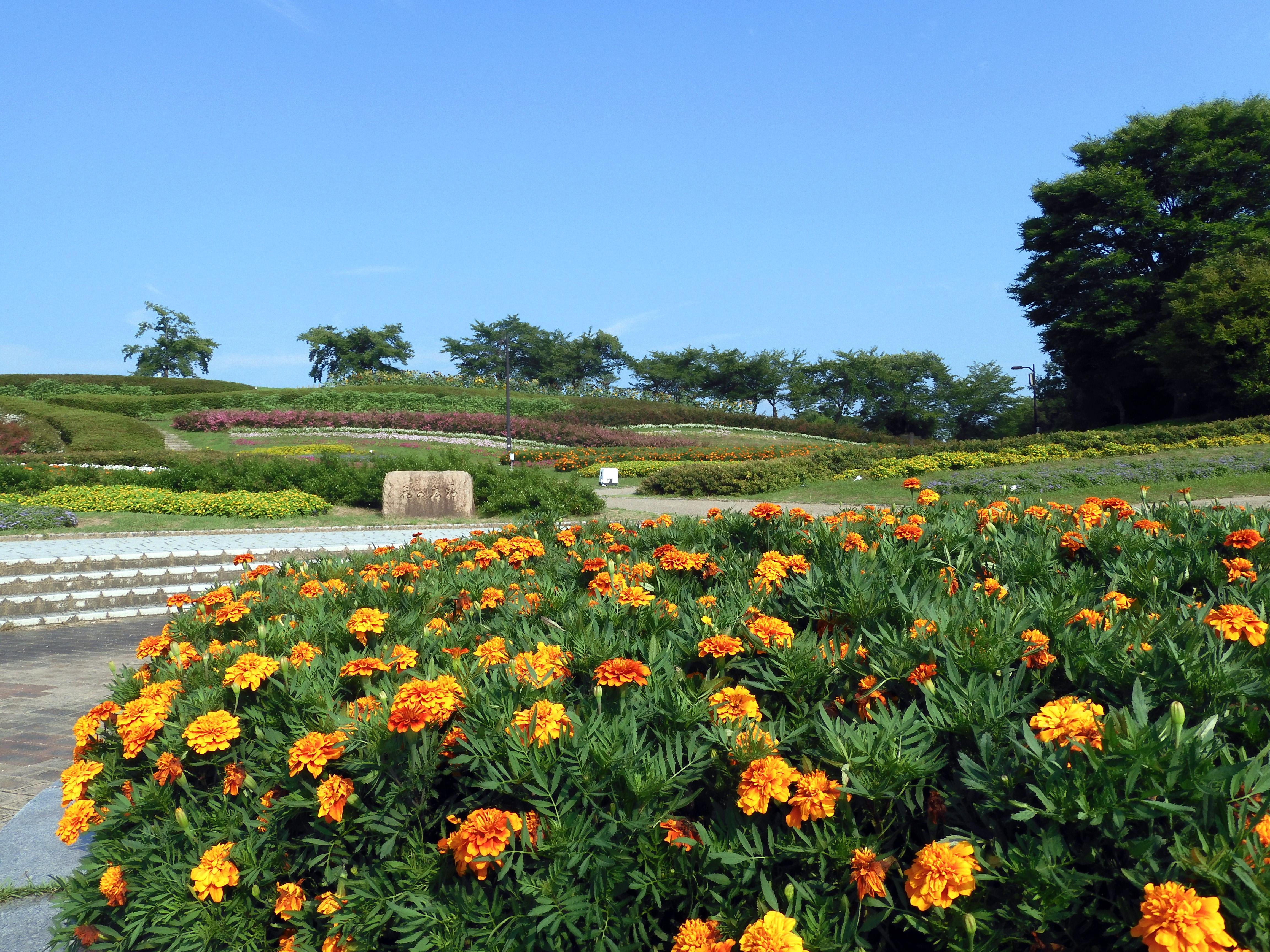丘陵 奈良 公園 馬見